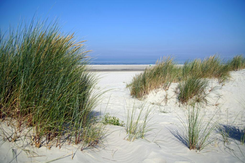Nordsee Langeoog Dünen