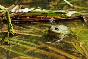 Homburg Biotop Beeden Biosphäre Naherholungsgebiet Bliesgau Storch Beider Brünnchen Frosch