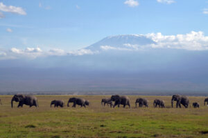 Safari in Kenia Amboseli Nationalpark mit Kilimanjaro und Elefanten