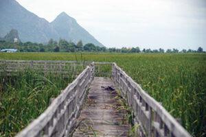Khao Sam Roi Yot Nationalpark Sumpflandschaft