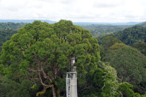Brunei Ulu Temburong Nationalpark Canopy Walk