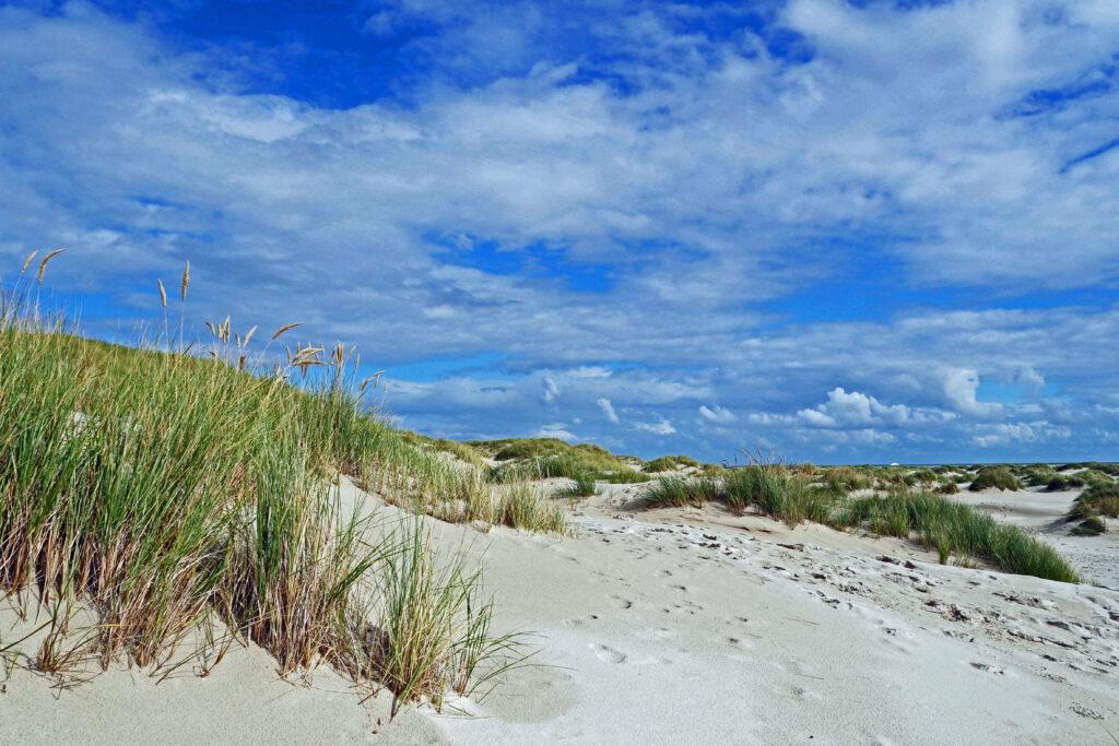 Nordsee Amrum Dünen