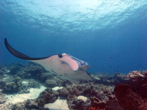 Indonesien Komodo Mawan Manta