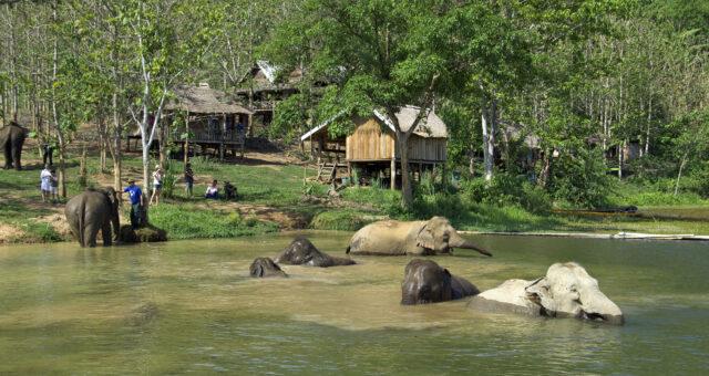 Elephant Conservation Center (ECC)